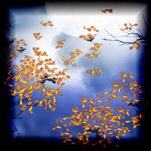 Mgtcs Fall Leaves High Quality PNG files