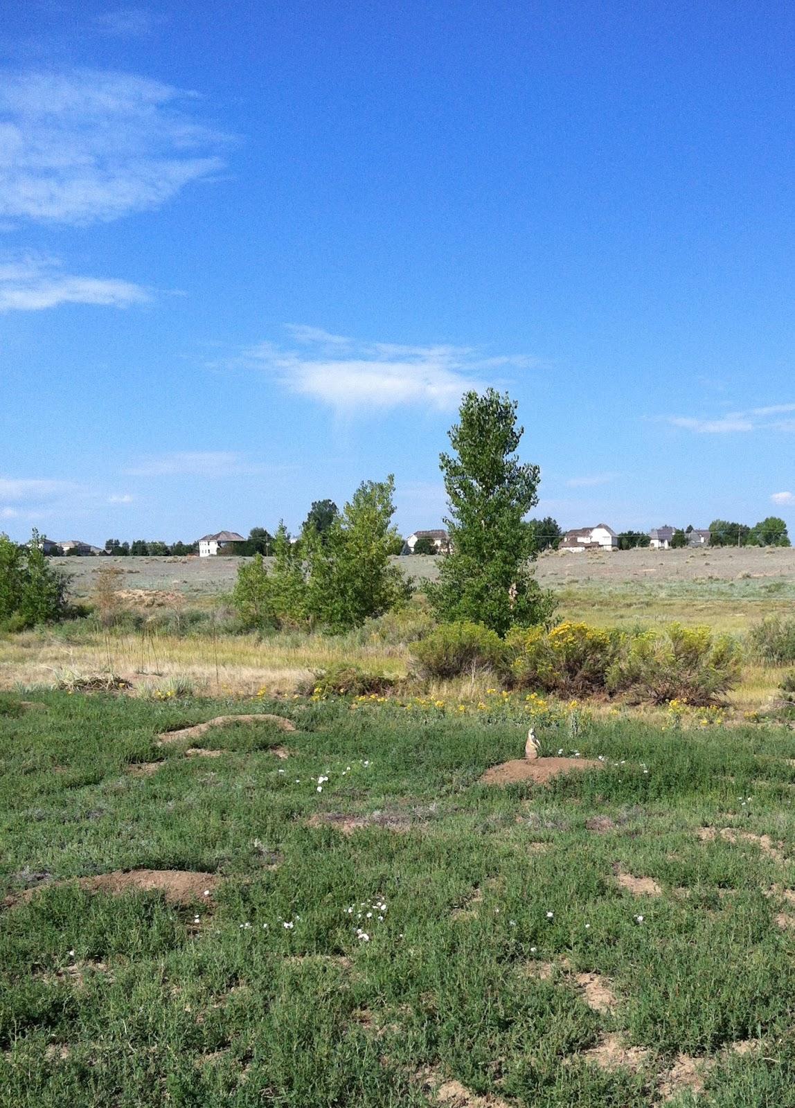 Dream Prairie, why dream Prairie in a dream to see 71