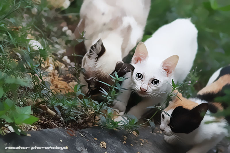keluarga kucing belakang rumah