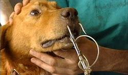 Crudeltà senza fine Animali vivi usati come esca