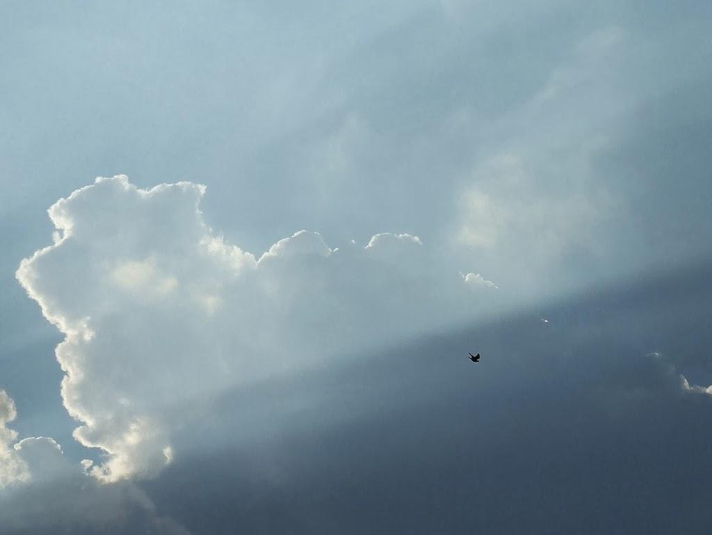 Freedom Sky Bird Flying Free Anxiety