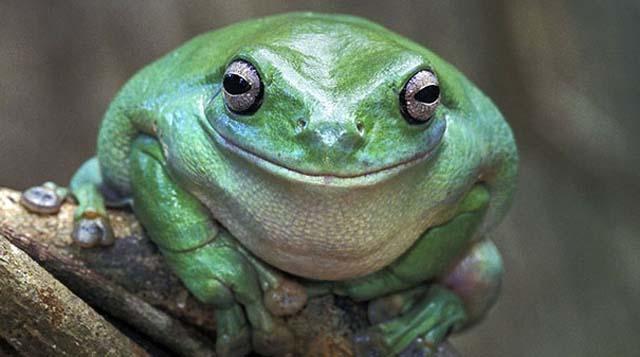 Los 30 animales más felices del mundo que te harán sonreír pareidolia