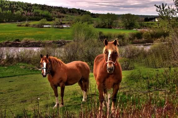 imágenes de paisajes con caballos