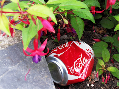 Coca-Cola tin by a fuchsia plant