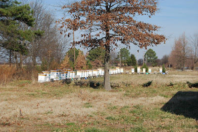 A view of Peace Bee Farm's main beeyard in fall just after the seasonal honey harvest.