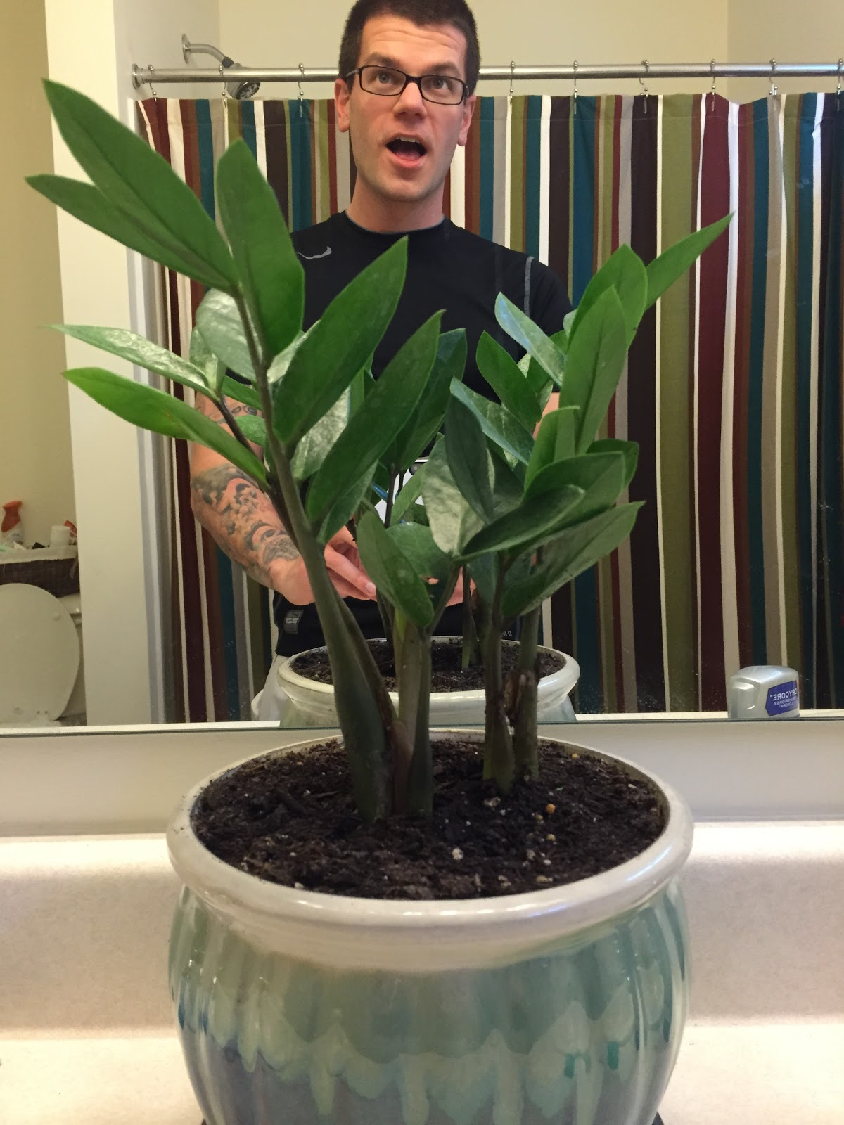 zz plant in bathroom