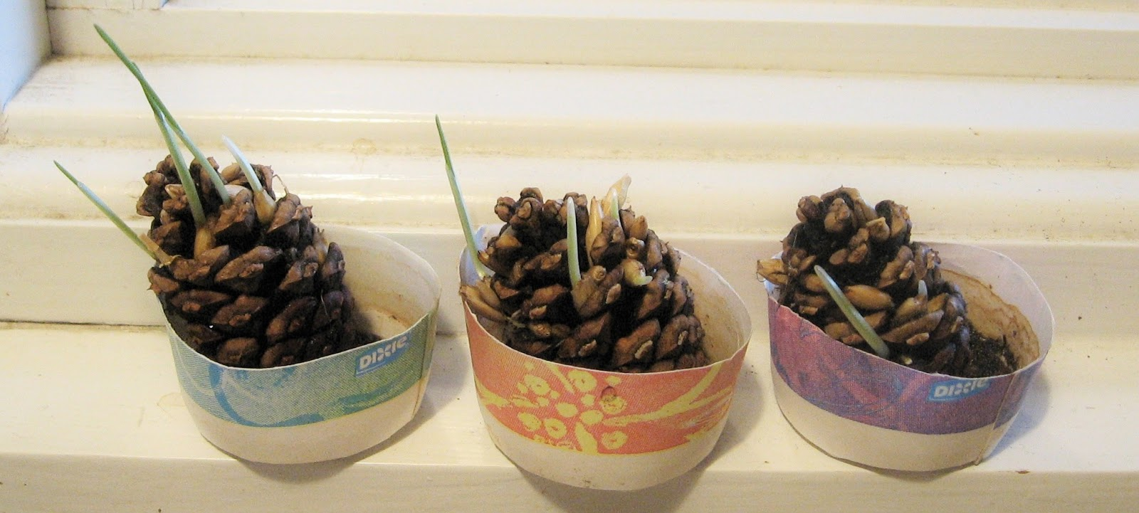 Almost Unschoolers: Pinecone Planters