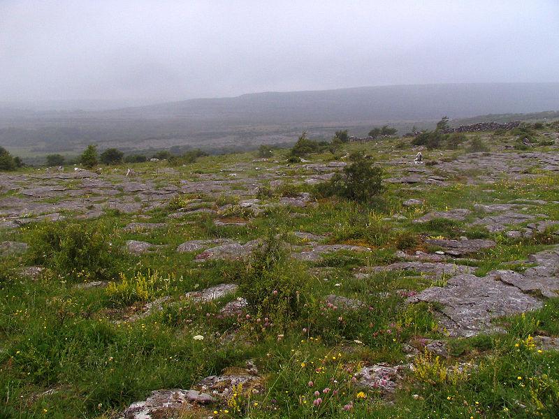 Burren karst meadow