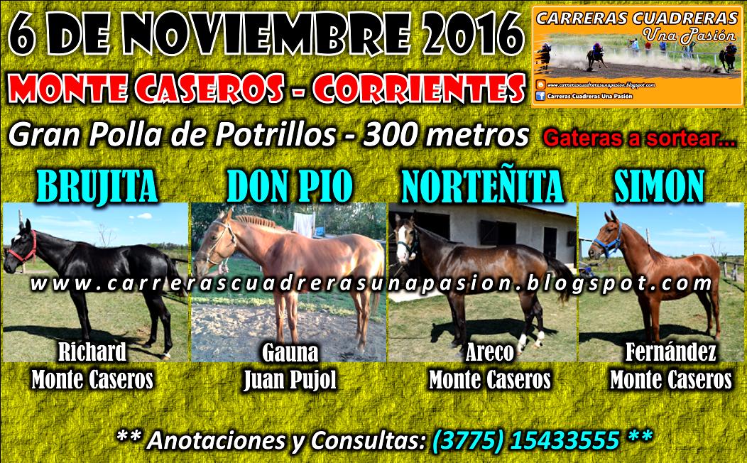 MONTE CASEROS - POTRILLOS - 300
