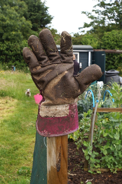 glove on post to dry out- growourown.blogspot.com - an allotment blog