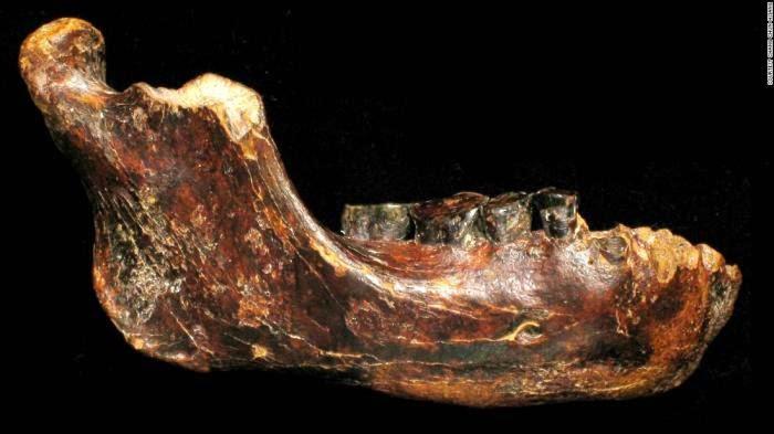 Fosil manusia purba jenis baru ditemui