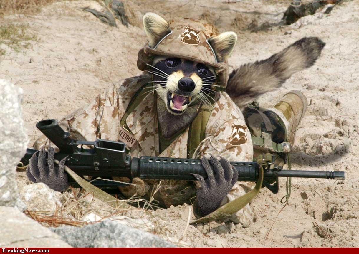 Funny raccoons funny animals