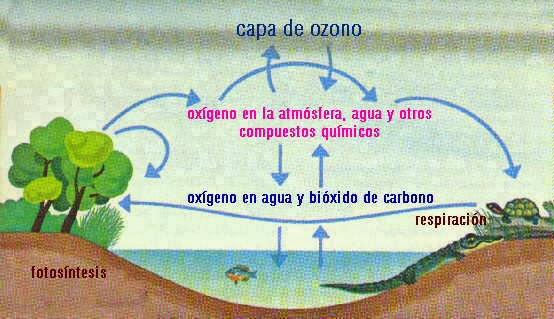 CICLO DEL OXÍGENO