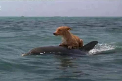 Dolphins Help Save Dog from Drowning