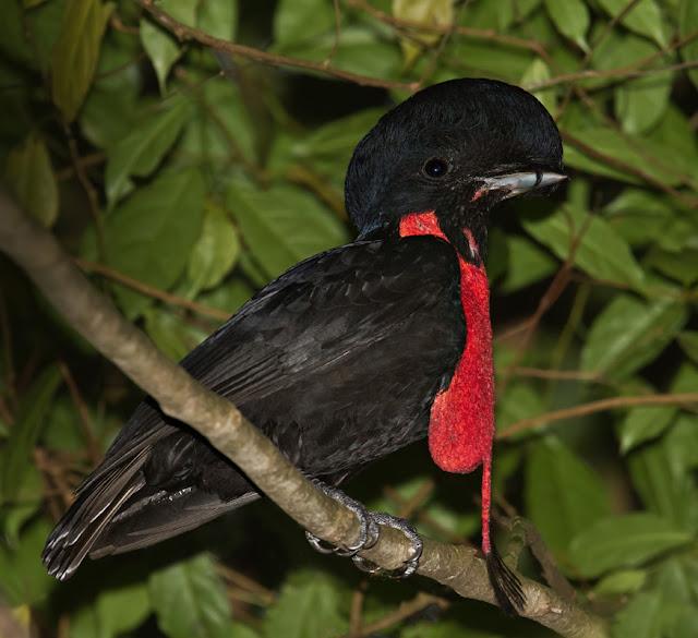 How to Make a Felt Umbrella Bird {ABC Animals in Felt} from Wildflower Ramblings