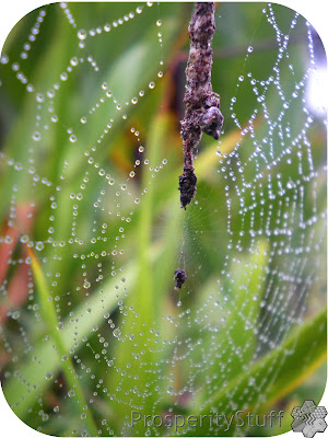 Raindrops & Spiderwebs