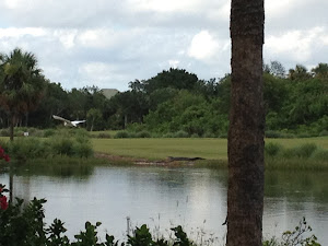Guest Post by H.H.Fly (Head Household Fly, Sanibel Island)