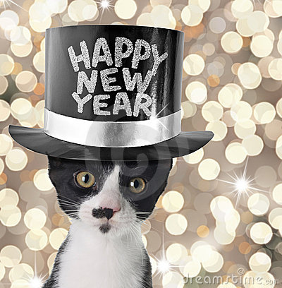Happy New Year Cat Happy New Year All The Kitty