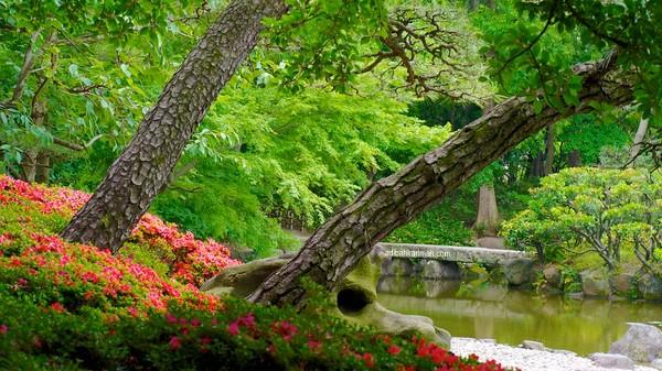 tenang dan mendamaikan bergambar di tasik tennoji park bersama adibah karimah