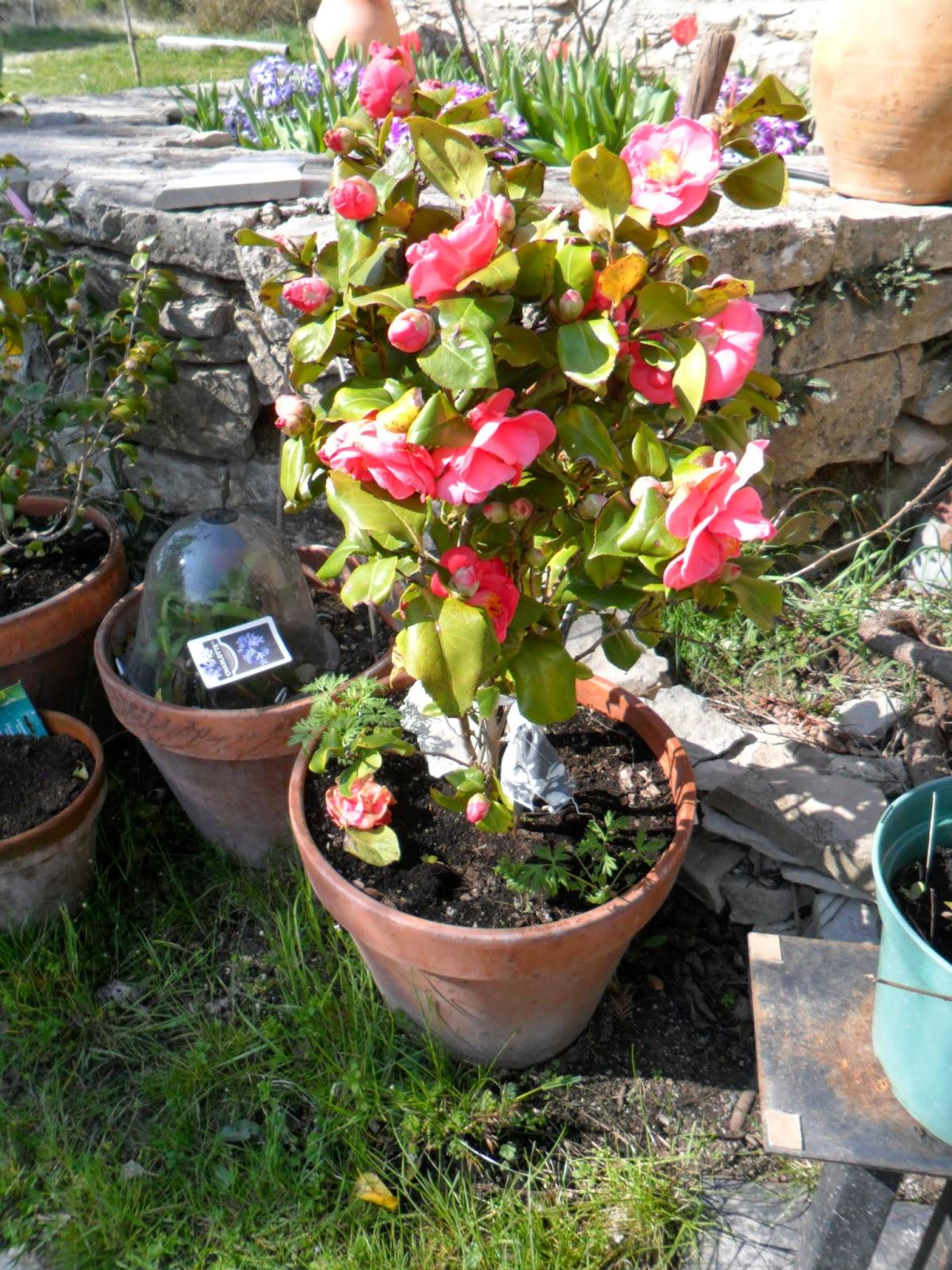 Le jardin de prosper mars 2015 for Jardin mars 2015