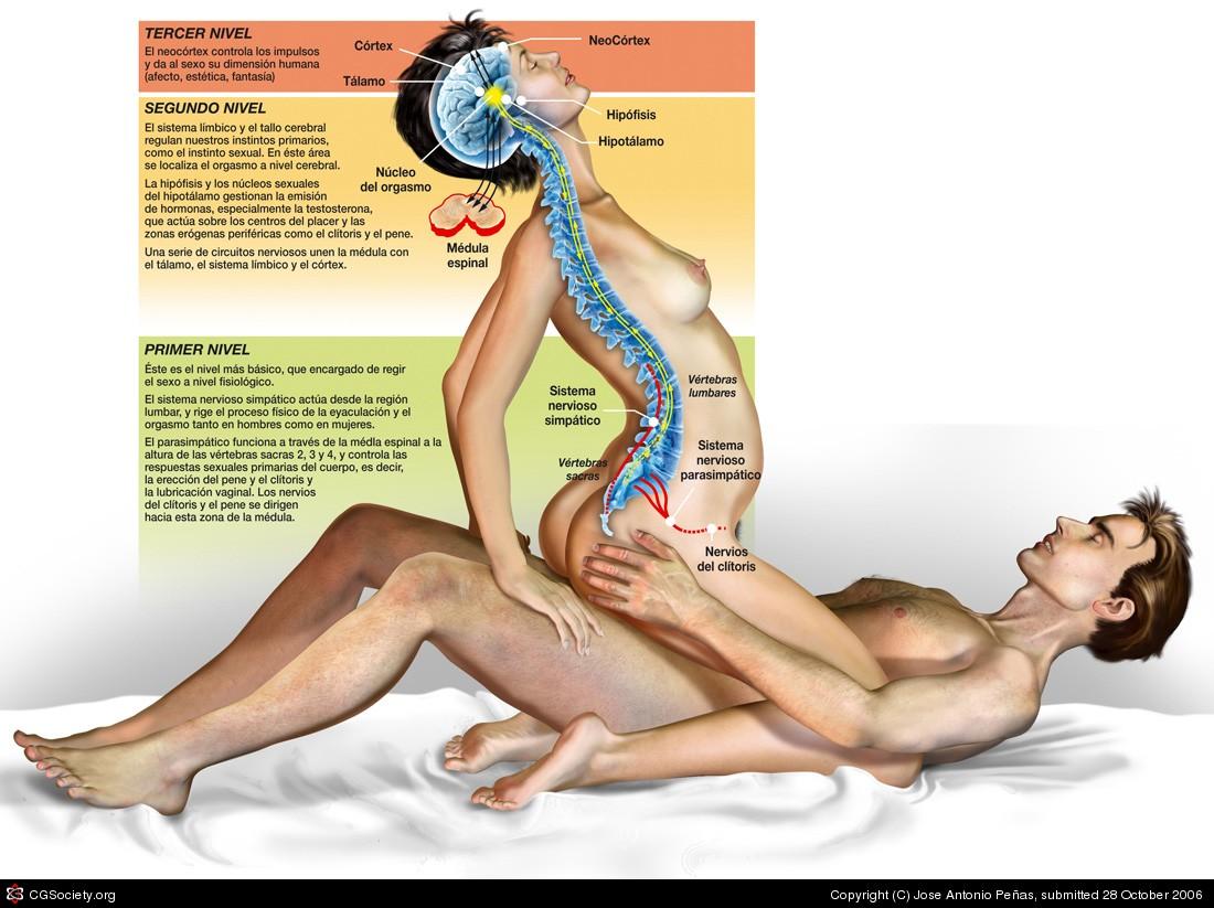 Cul es la diferencia entre orgasmo y eyaculacin