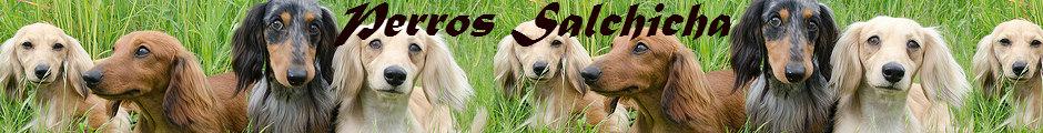 Cuidado de Perros Salchicha