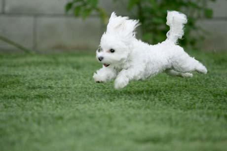 puppy list pictures puppy 460x306