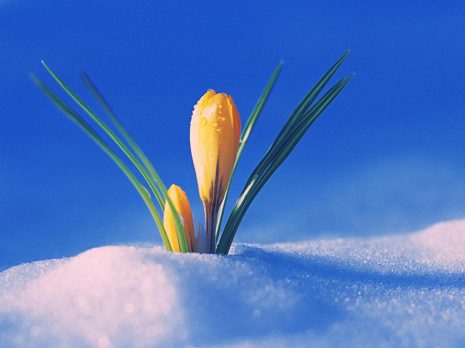 lente achtergronden hd - photo #48