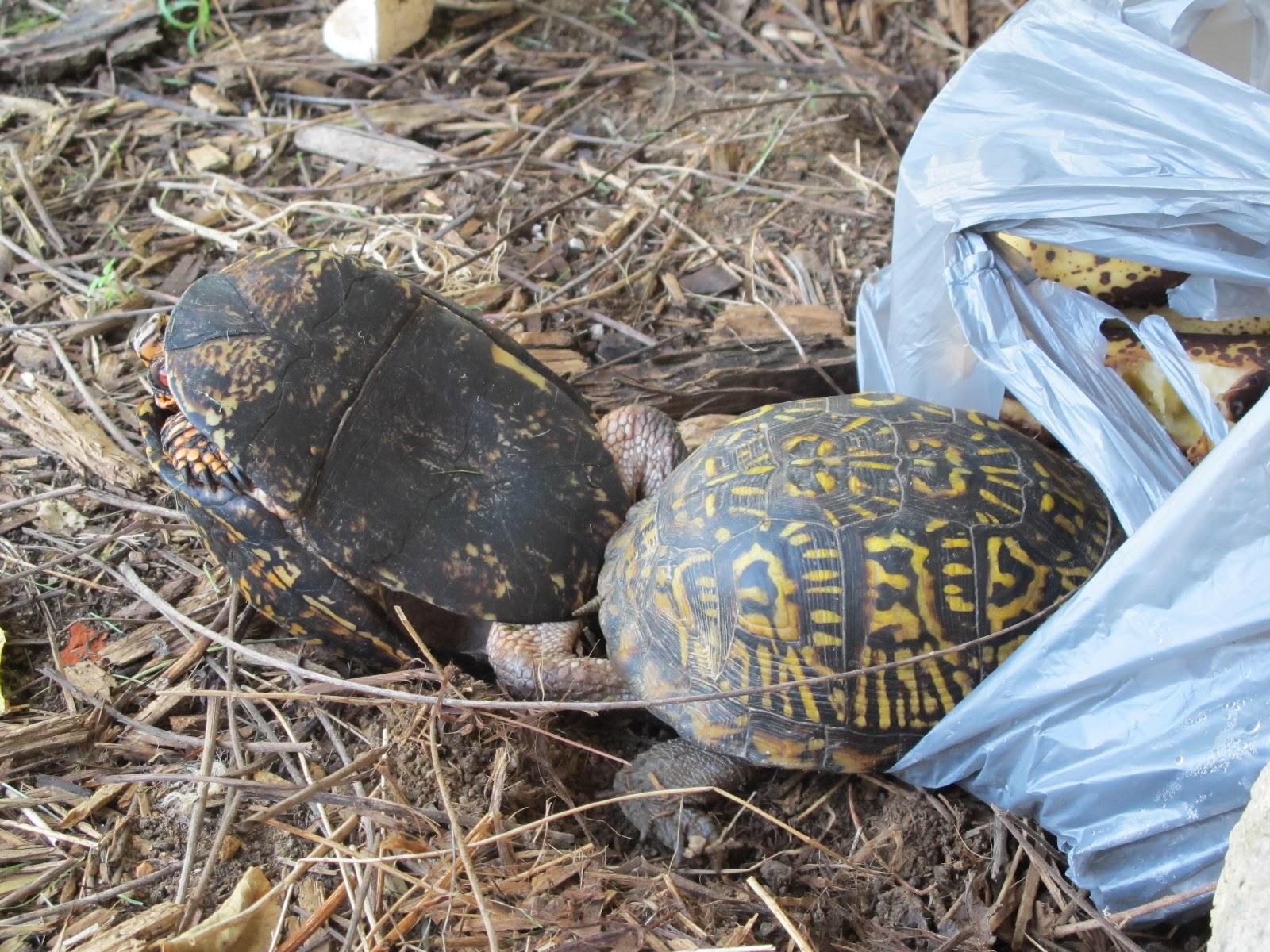 yard turtles