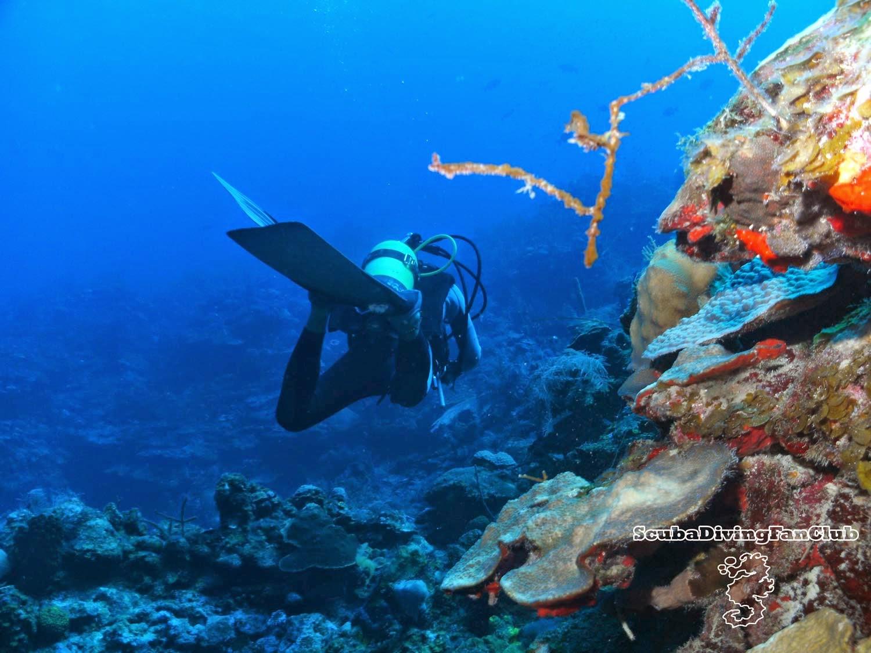 Scuba Diving Wallpaper
