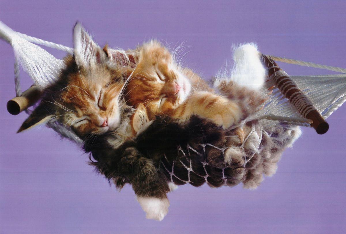 http://2.bp.blogspot.com/-Xi-hDniQjOA/TwZX0aBwtqI/AAAAAAAAffc/y8fm5NrA-3g/s1600/cute-funny-kitten-wallpapers-1.jpg