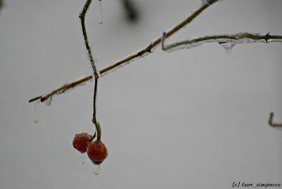 iarna-winter-ploaie inghetata-freezing rain