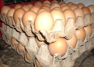 Permasalahan yang terjadi pada telur ayam