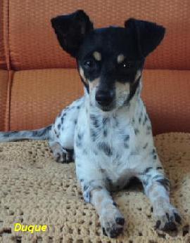 Duque: Nosso cãozinho!