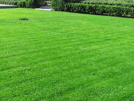 Garden sopelana mundo verde jardinarium c sped - Escarificador de cesped ...