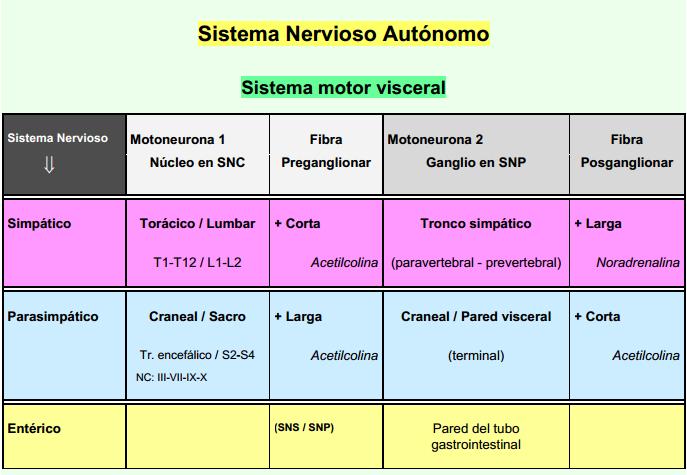 Anatomía 2012 - Ayudante Pablo Prado: Cuadro Sinóptico S.N.A.