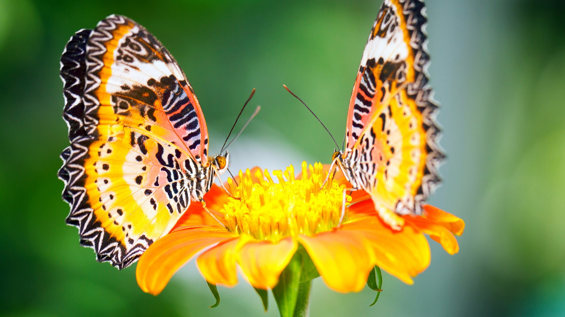 most beautiful flowers wallpapers butterflies - photo #23