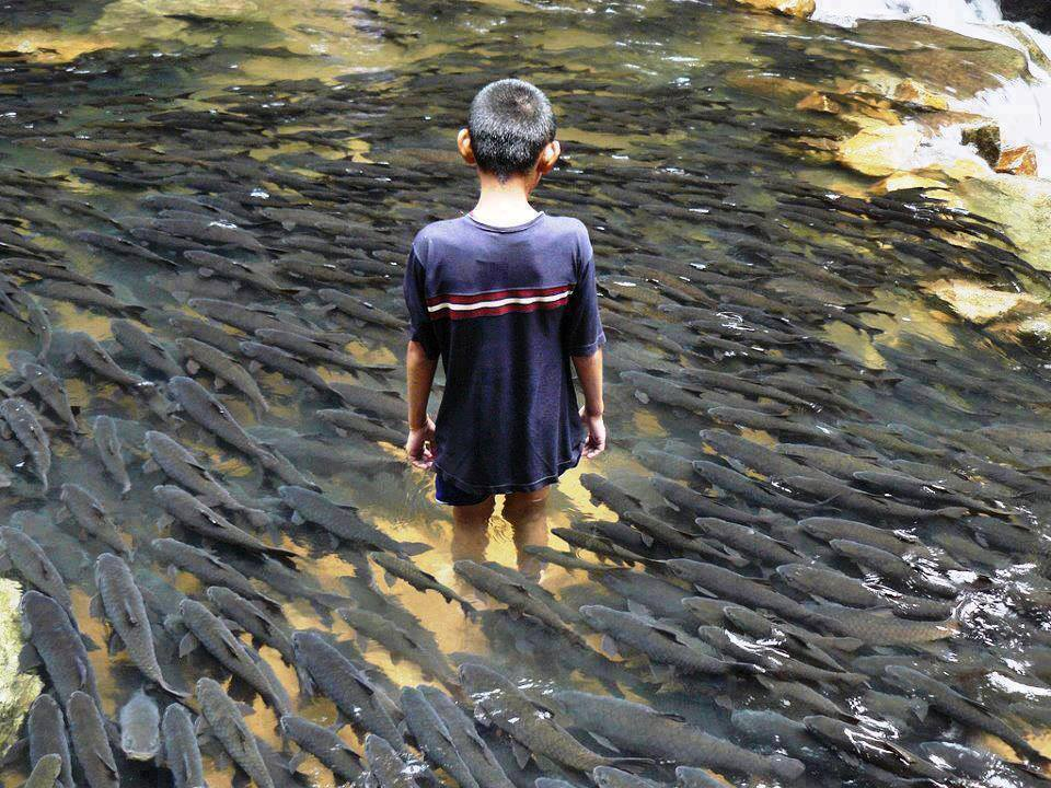 Kuningan Indonesia  City pictures : Holy Fish in Batu Bulan, KuNingan, West Java, Indonesia | FUNNY ...
