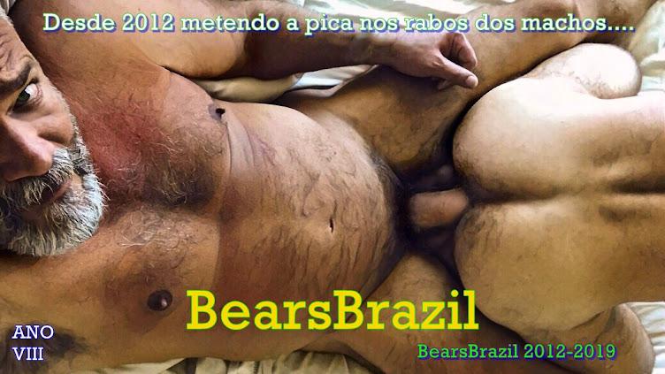 BearsBrazil - Os Seus Amigos Voltaram!