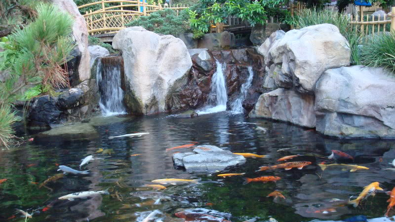 Choosethe right koi pond filter koi fish care info for Japan koi fish pond