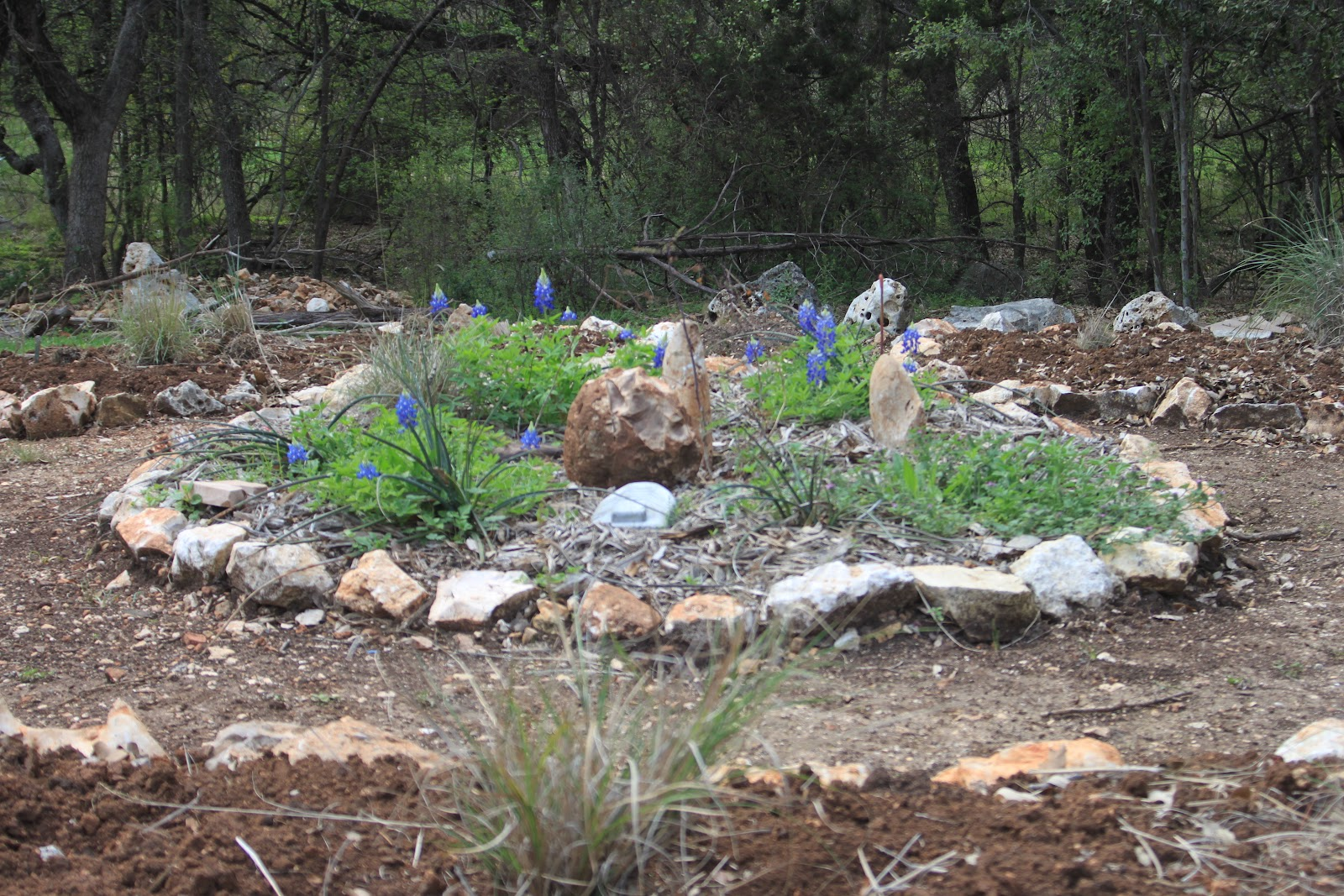 Rock Oak Deer Gardening On The Rocks New Backyard Garden