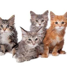 KisseKatt Din Kattbutik - Kika in i kattbutiken-
