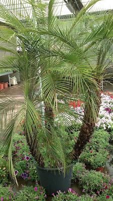 http://www.centrodemesa.org/2011/09/alquiler-de-plantas-para-eventos.html