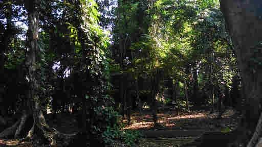 Bogor Botanical Gardens How Much Is Oxygen Price Bogor
