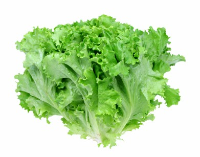 manfaat daun selada