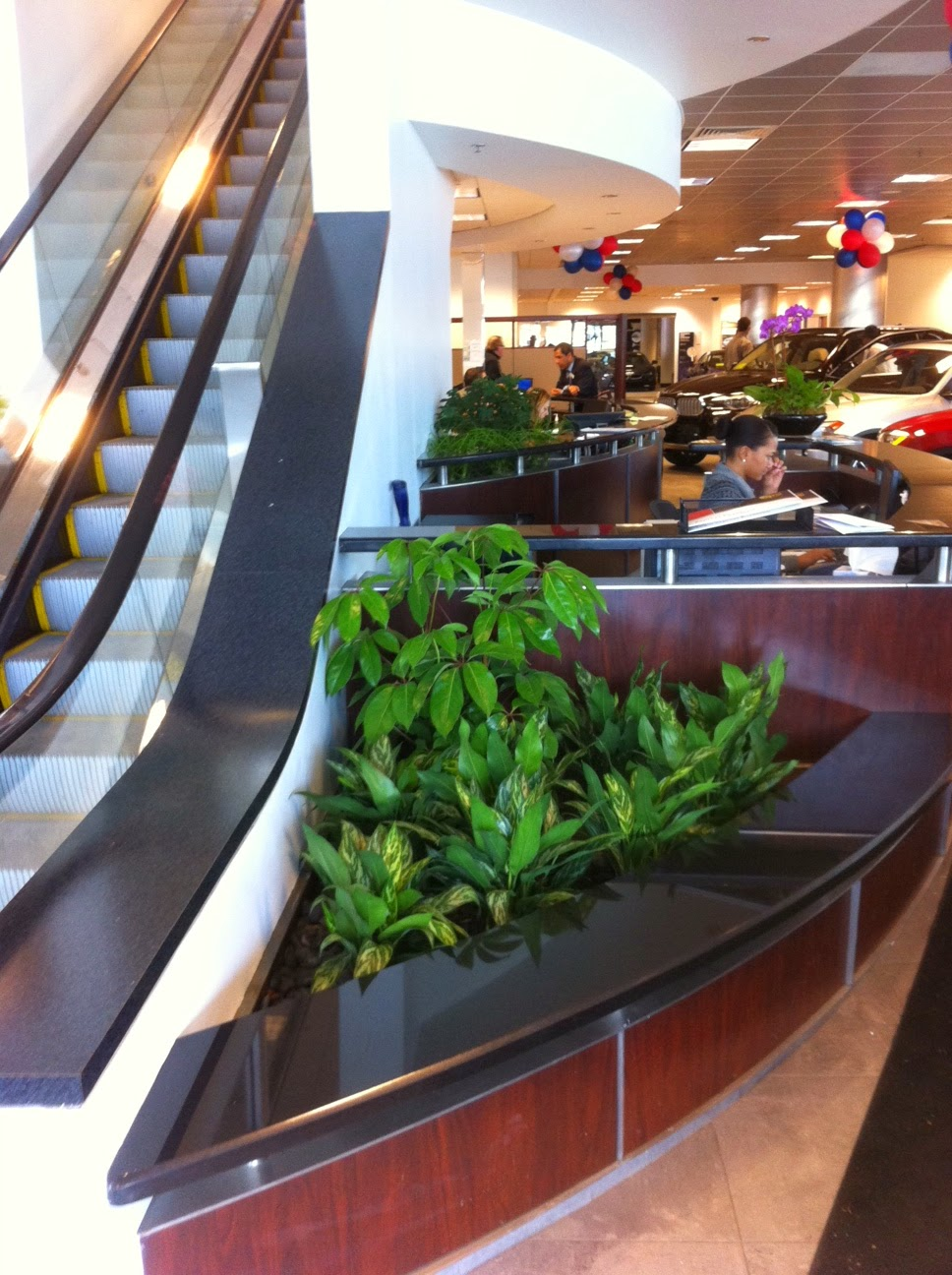 planter of interior green plants low light by Plantscape Designs Inc.