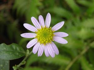 古民家物件に咲く野菊