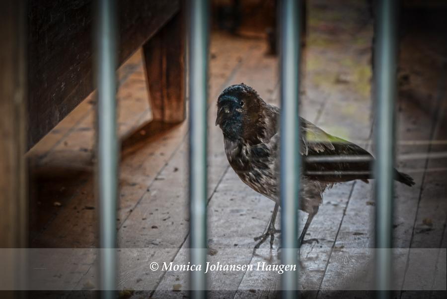 fuglene i farger fuglekasser