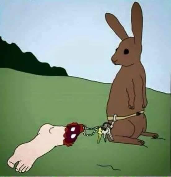 Pé de coelho