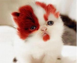 precioso cachorro de gato